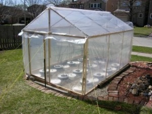 For Spring & Fall, the grapes are protected by a plastic greenhouse