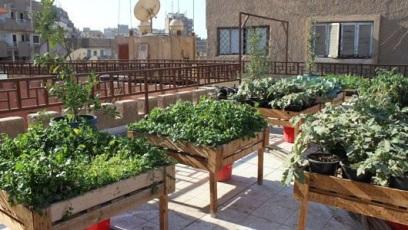 cairo-roof-garden