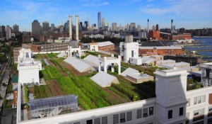 roof-garden-brooklyn-gardens