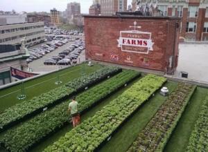 roof-garden-fenway