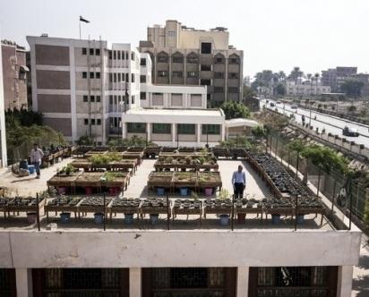 rooftop-garden-in-a-school-in-qaliubiya-cairo-2